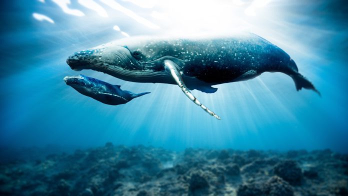 Bitcoin Ownership Steadily Shifts From Whales to Small Investors Data