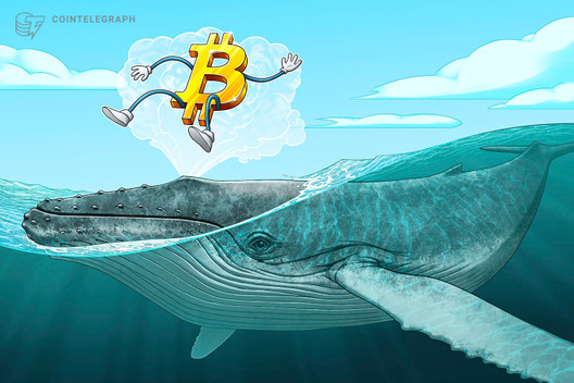 Number of Bitcoin Cash Whales Drop Following 39 Price Surge
