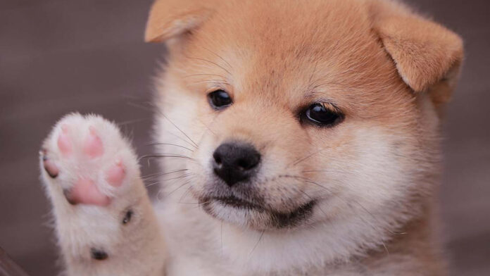 248 Weekly Gains — Baby Doge Coin Continues to Rally